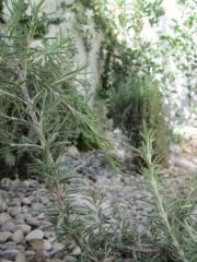 Apivita herbs