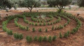 Apivita labyrinthe romarin et lavende