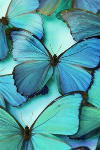 Couleur Blu Butterfly