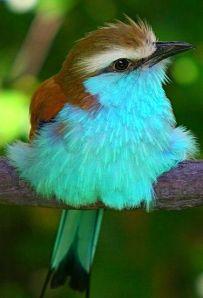 Couleurs oiseau