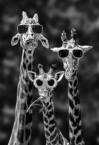 Lunettes Girafe