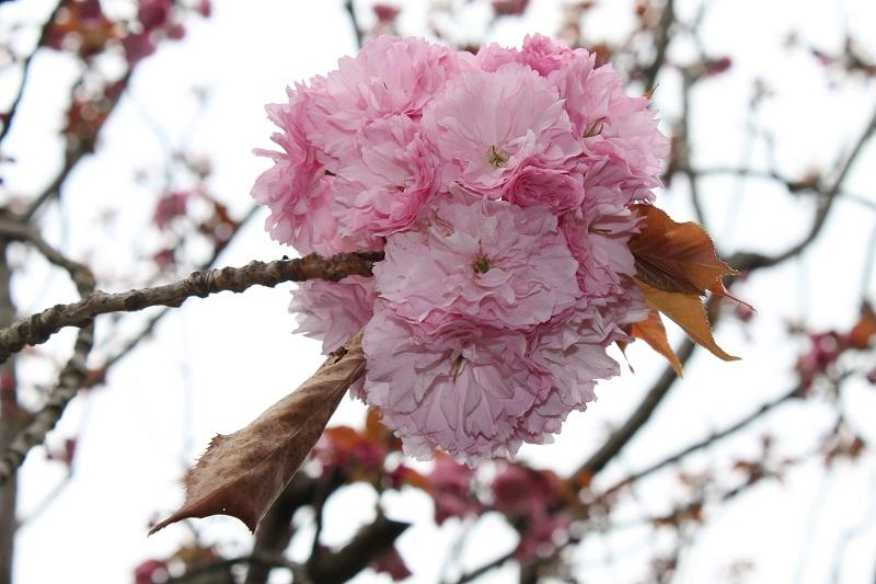 Jardin japonais à Rome
